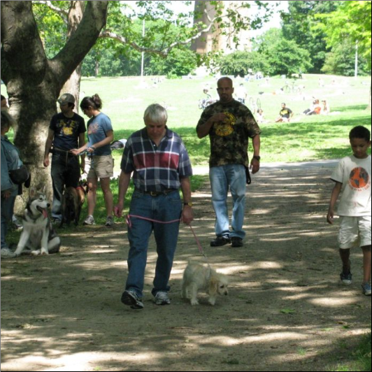 Dog Training Bronx