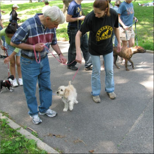 Dog Training NY