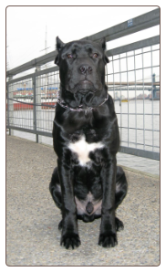 New York Obedience school - Queens