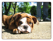 College Point Dog Training - Queens