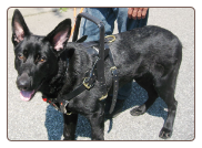 Service Dog Training - Roslyn Heights
