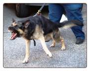 Dog Protection Training - Queens NY
