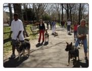 Free Dog Training Camp - Flushing - Queens
