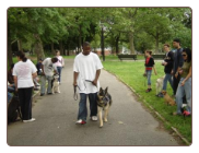 Dog Training Camp - Juniper Valley Park - Queens