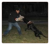 Guard Dog NY, Dog Protection Training