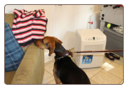 NY Bed Bug Canine Detection