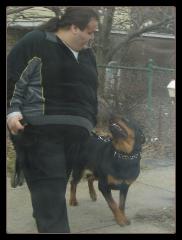 dog obedience training, dog training queens, dog training ny
