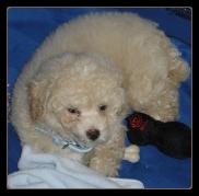 Puppy Training At Abc S Of Dog Training Dog Training Made