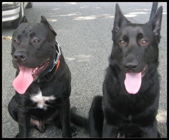 Dog Obedience Training Bronx