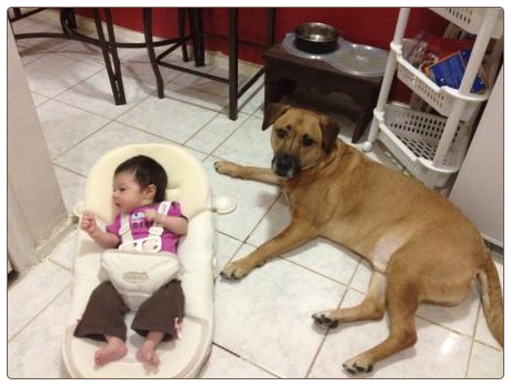 Dog Training Queens - Introducing your baby to your dog - Arainna & Nei